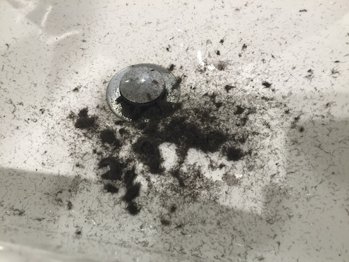 Sink full of hair from my 'clean' Bald Eagle